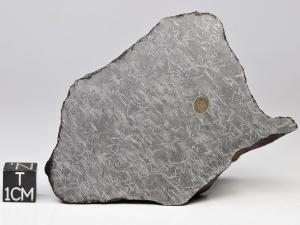 NWA-859-Taza-plessitic-octahedrite-368g-complete-specimen