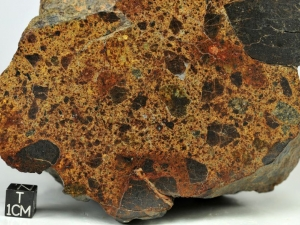 nwa-8524-ll4-6-1-6kg-ll-breccia-with-two-kinds-of-clasts-note-large-dark-clast-at-left-side-cut-surface-close-up