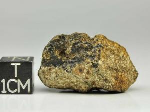 dhofar-007-euc-12g-complete-specimen