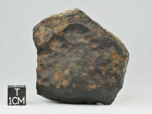 sau-001-l4-5-187g-complete-specimen