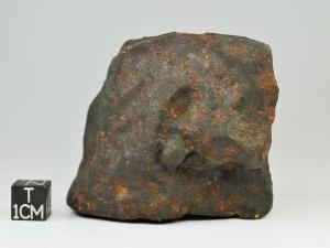 sau-001-l4-5-250g-complete-specimen