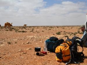 camels-camels-lots-of-camels-photo-woreczko-pl_