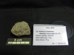 Collection-of-meteorites-at-University-of-Silesia-photo-Ewa-Budziszewska-Karwowskah