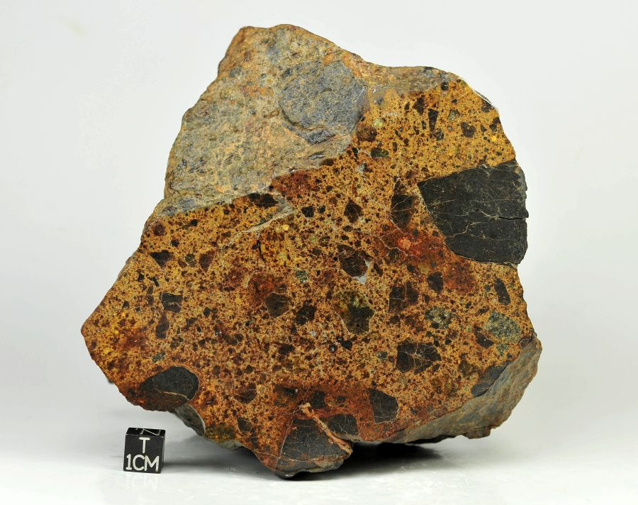 nwa-8524-ll4-6-1-6kg-ll-breccia-with-two-kinds-of-clasts-note-large-dark-clast-at-left-side-cut-surface-1