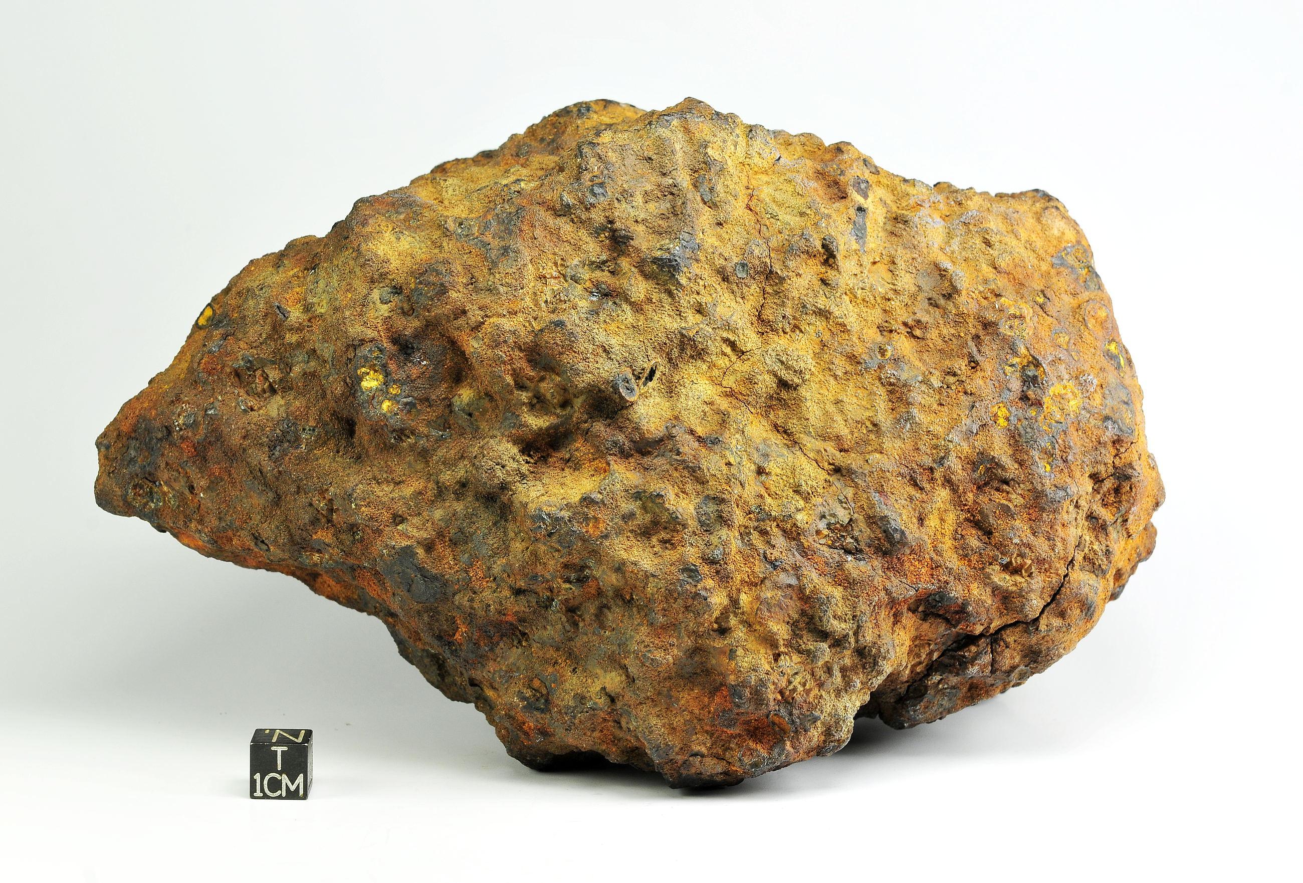Brahin PAL 5kg